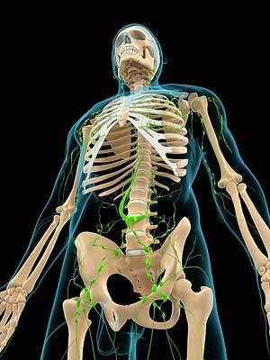 Lymphatic System Art Print by Sciepro/science Photo Library