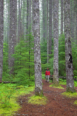 Model Released Photograph - Wa, Gifford Pinchot National Forest by Jamie and Judy Wild