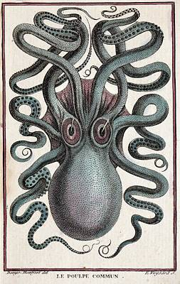 Squids Photograph - 1801 Montfort Octopus Engraving Colour by Paul D Stewart