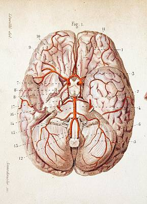Historical Images Photograph - 1840 Historical Image Brain Blood Supply by Paul D Stewart