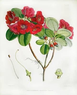 Joseph Photograph - 1851 Rhododendron Named By Joseph Hooker by Paul D Stewart