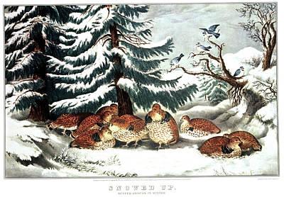 1860s Snowed Up - Ruffed Grouse Art Print