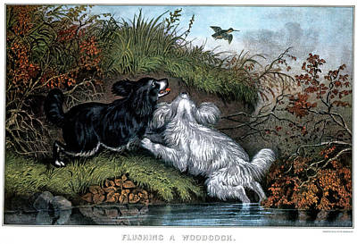 Woodcock Wall Art - Painting - 1860s Two Spaniel Dogs Flushing by Vintage Images