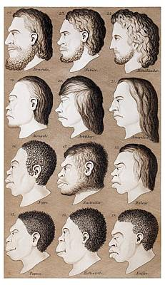 1870 Haeckel Racist Human Illustration Art Print by Paul D Stewart