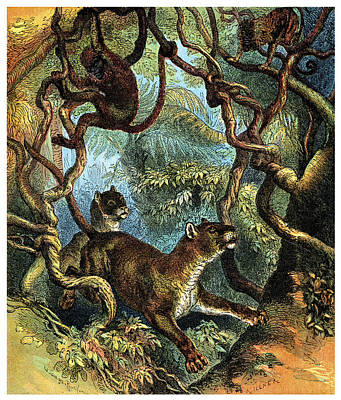 Painting - 1890 Puma Chasing Monkeys by Historic Image