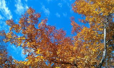 Photograph - Autumn Color by Kenny Glover