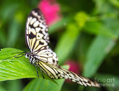 Photograph - Gentle Butterfly by Rene Triay Photography