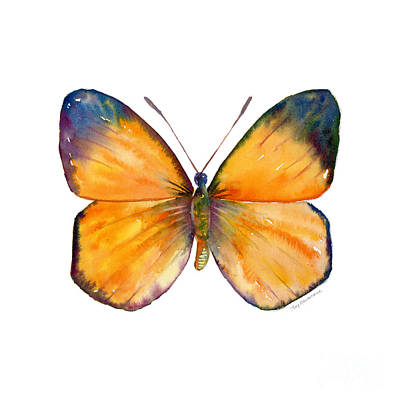 Animals Paintings - 19 Delias Aruna Butterfly by Amy Kirkpatrick