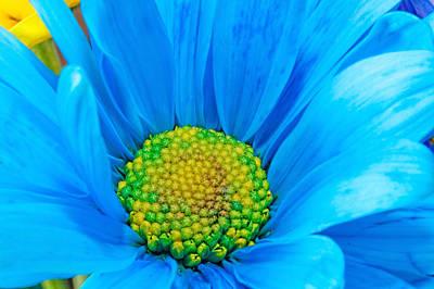 Photograph - Gerber Flower by Peter Lakomy