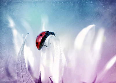 Good Luck Photograph - Ladybug by Heike Hultsch