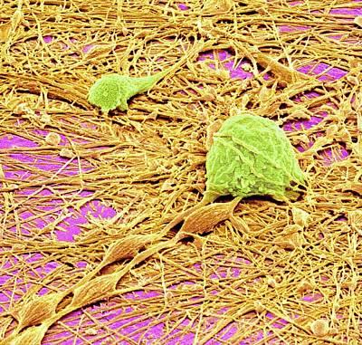 Nervous System Cells Art Print