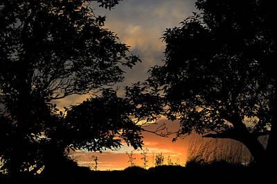 Sunset Art Print by Barbara Walsh
