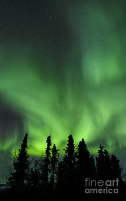 Photograph - The Aurora Borealis by John Shaw