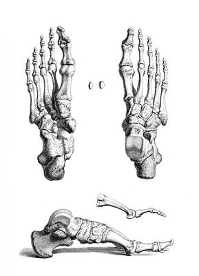 Photograph - William Cheselden, Osteographia, 1733 by Science Source