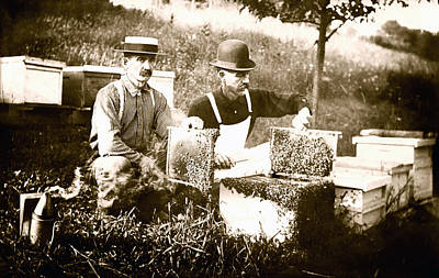 Photograph - 1900 Beekeepers by Historic Image