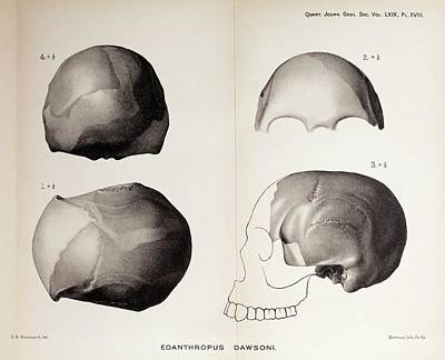 Handaxe Photograph - 1913 Toned Skull Plate Piltdown Man Hoax by Paul D Stewart