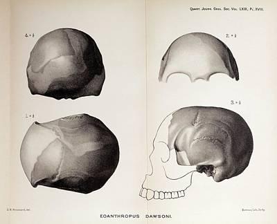 Ancestors Photograph - 1913 Toned Skull Plate Piltdown Man Hoax by Paul D Stewart