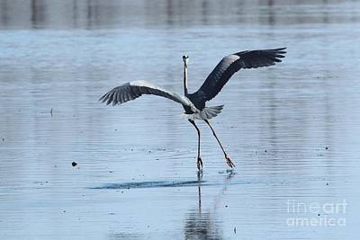 Photograph - Great Blue Heron by Jack R Brock