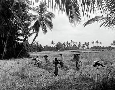 1920s 1930s 7 Balinese Workers In Rice Art Print