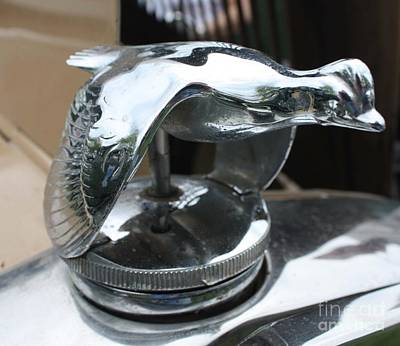 Photograph - 1930 Ford Coupe Quail Hood Ornament by John Telfer