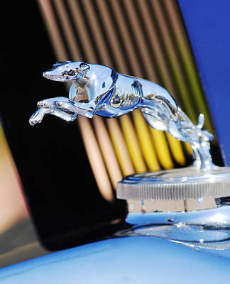 Greyhound Photograph - 1930 Lincoln L Judkins Berline Hood Ornament by Jill Reger