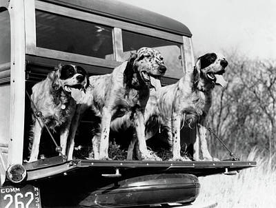 Old Woody Station Wagon Wall Art - Photograph - 1930s 1939 English Setter Hunting Dogs by Vintage Images
