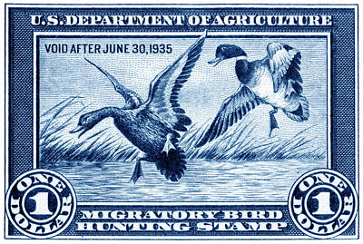 1934 American Bird Hunting Stamp Art Print by Historic Image