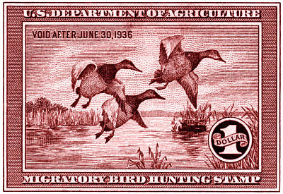 1935 American Bird Hunting Stamp Art Print by Historic Image