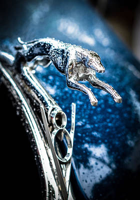Photograph - 1936 Ford V8 Greyhound Hood Ornament  by Ronda Broatch