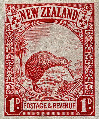 1936 New Zealand Kiwi Stamp Art Print by Bill Owen