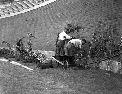 Retro Images Archive Photograph - 1937 Planting Of The Ivy At Wrigley Field by Retro Images Archive