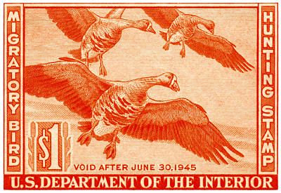 1944 American Bird Hunting Stamp Art Print by Historic Image