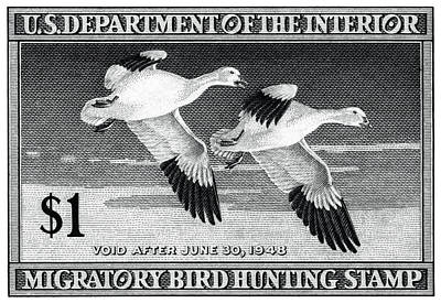 Snow Geese Painting - 1947 American Bird Hunting Stamp by Historic Image