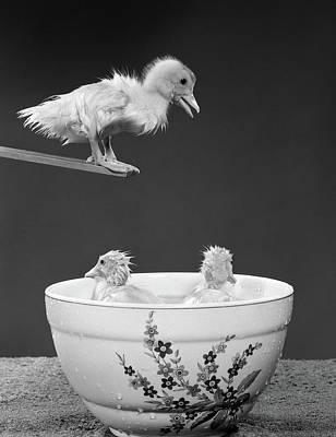 1950s Duckling On Diving Board Looking Art Print