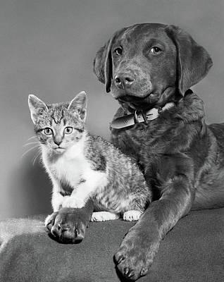 1950s Portrait Of Lab Mix Dog Lying Art Print