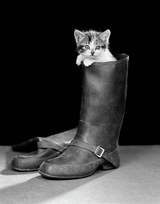 Puss Photograph - 1950s Puss In Boots Cute Kitten by Vintage Images
