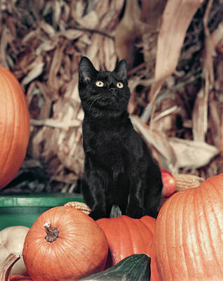 1950s Wide-eyed Black Cat Kitten Art Print