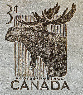 Photograph - 1953 Canada Moose Stamp by Bill Owen