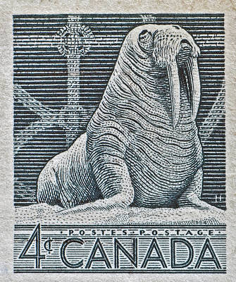 Photograph - 1954 Canada Walrus Stamp by Bill Owen