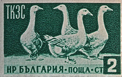 Photograph - 1955 Bulgarian Geese Stamp by Bill Owen