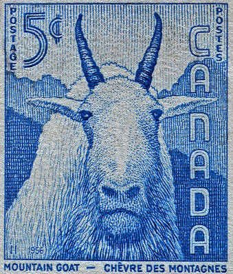 Photograph - 1956 Canada Mountain Goat Stamp by Bill Owen