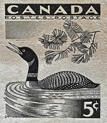 Photograph - 1957 Canada Duck Stamp by Bill Owen