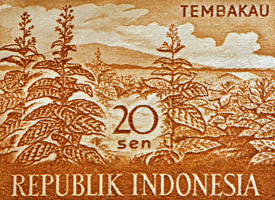 Photograph - 1960 Indonesian Tobacco Plant Stamp by Bill Owen