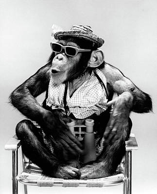 Lawn Chair Photograph - 1960s Chimp Sitting In Lawn Chair by Vintage Images
