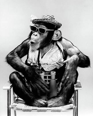 1960s Chimp Sitting In Lawn Chair Art Print
