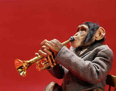 Trumpet Photograph - 1960s Chimpanzee In Sports Jacket by Vintage Images