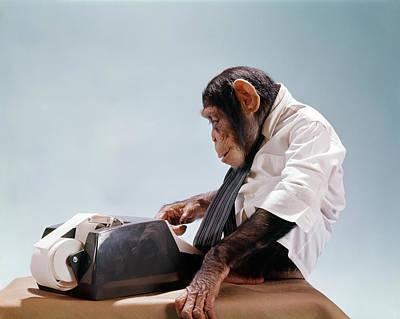 1960s Chimpanzee Using Office Adding Art Print