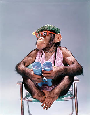 Lawn Chair Photograph - 1960s Chimpanzee With Binoculars Straw by Vintage Images