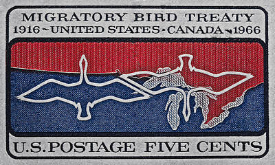 Photograph - 1966 Migratory Bird Treaty Stamp by Bill Owen