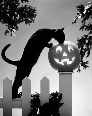 1970s Black Cat And Jack-o-lantern Art Print
